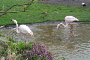 Oeverbescherming bij flamingo's